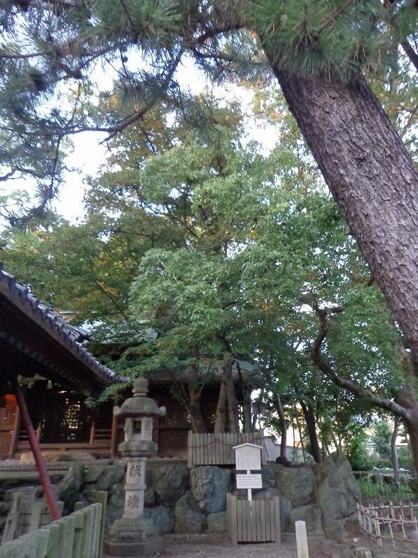 大乃伎神社のボダイジュ